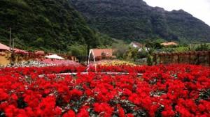 Scapa-de-iarna-pe-insula-primaverii---Madeira