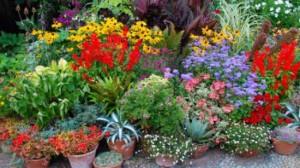 plante_n_05218600